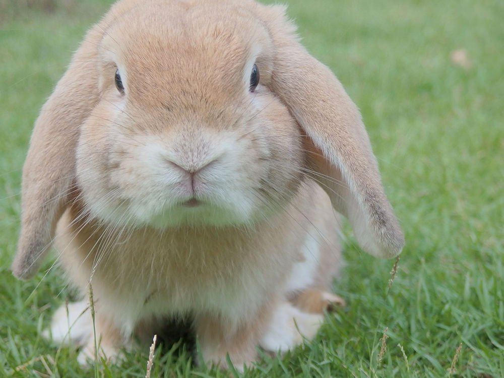 10 Tips For Looking After Rabbits
