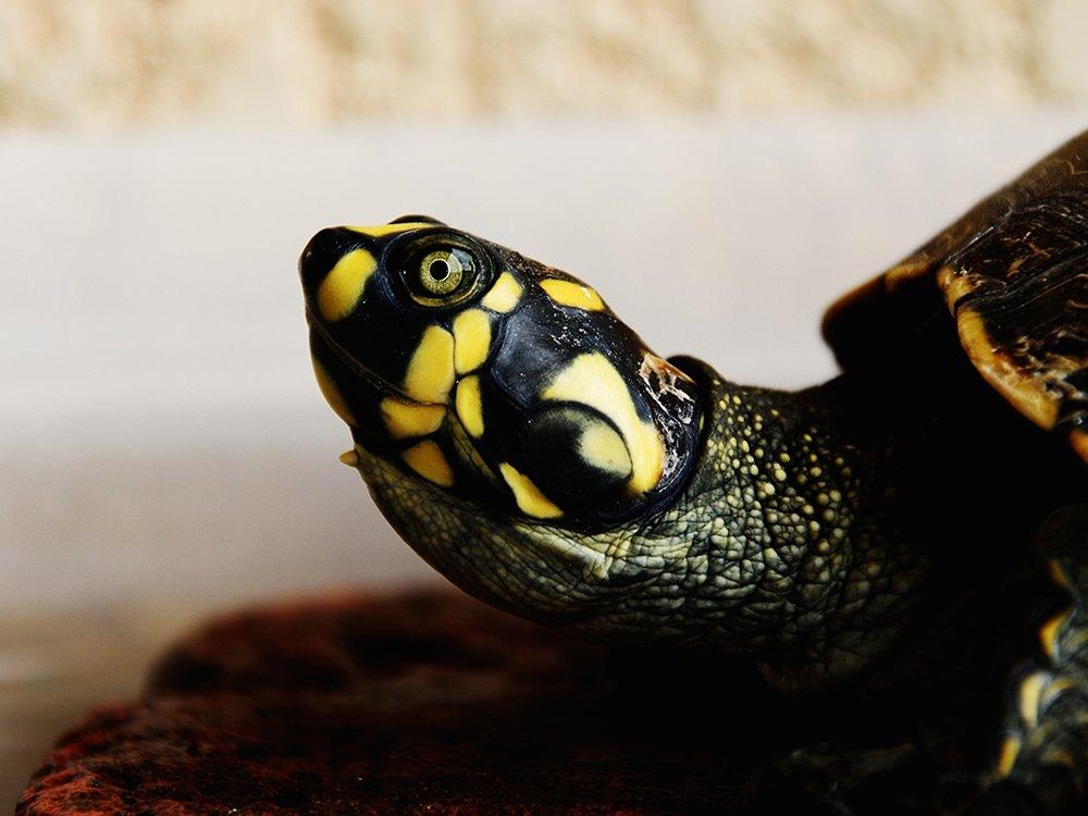 Reasons Why Reptiles Make Good Pets
